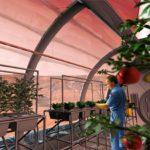 На Марсе и Луне можно выращивать овощи