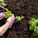 7 советов по уходу за землей на огороде
